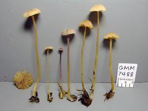 GMM7488